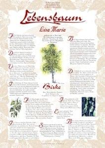 2406 Birke Baum Des Lichts Lebensbaum Geburtstag Taufe