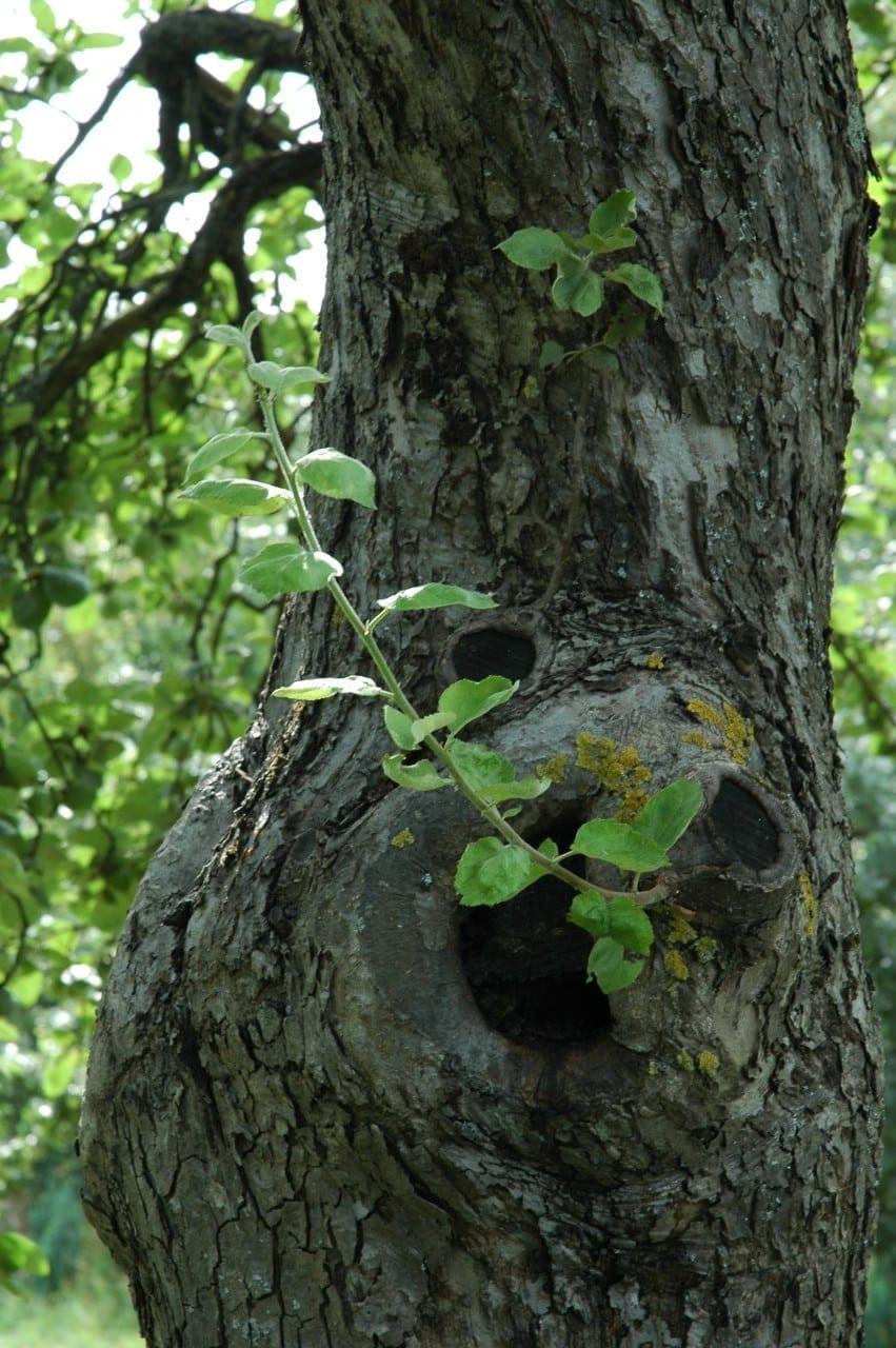 25.06.-04.07. Apfelbaum: Hochzeitsbaum der Liebe