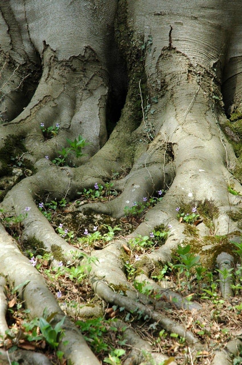 22.12. Buche: Baum der Intuition