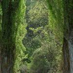 Pappel - Baum der Selbsterkenntnis