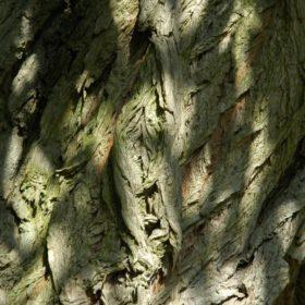 Weide Stamm mit Rinde - Baum der Vitalität