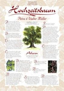 Hochzeitsbaum Urkunde Ahorn