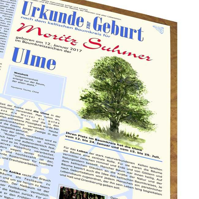 lebensbaum urkunde modern zur geburt f r jungs lebensbaum geburtstag taufe hochzeit baumkreis. Black Bedroom Furniture Sets. Home Design Ideas
