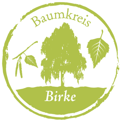 Birke Baumkreis Lebensbaum