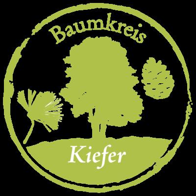 Kiefer Baumkreis Lebensbaum